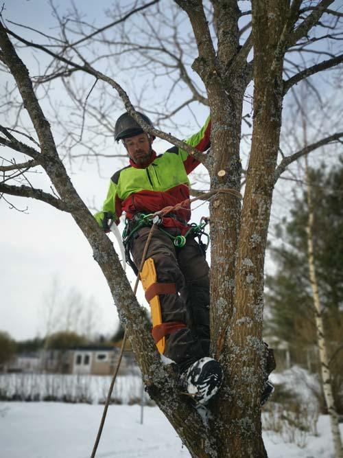 Puunkaadot ja puunhoito palvelut pihapuupalvelut