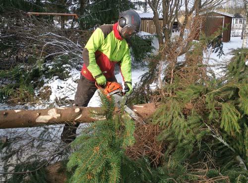 Puunkaatoon sisältyy puun pilkkominen klapeiksi ja risujen pois kuljetus